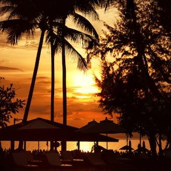 Puesta de sol en la playa en la línea de costa, palmera