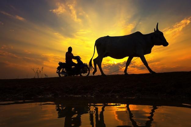 Puesta de sol silueta con campo de estilo de vida