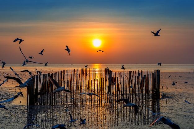 Puesta de sol con silueta de pájaros volando.