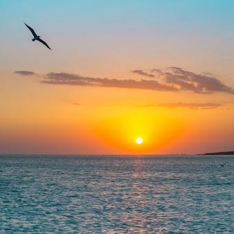 Puesta de sol tropical en la playa. australia, vincentia.