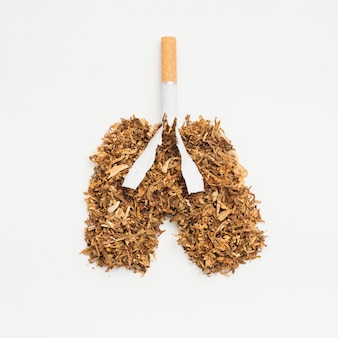 Pulmones hechos de tabaco y cigarrillos sobre fondo blanco.