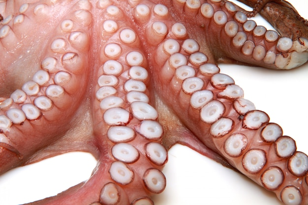 Pulpo crudo
