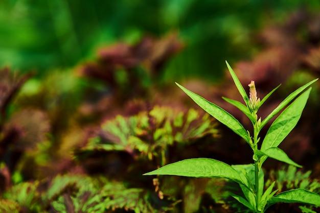 Punta de planta en tema verde natural y fondo morado
