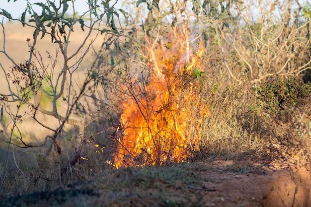 Quema de bosques. amazonia brasileña en llamas