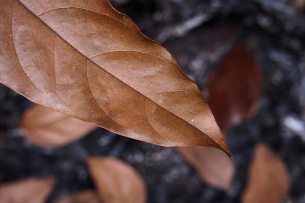 Quema de hojas secas. fondo de hoja de carbón