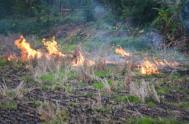 Quemar una agricultura agrícola / el agricultor usa quemaduras de fuego rastrojo en el campo humo que causa neblina con smog contaminación del aire causa del concepto de calentamiento global incendio forestal y de campo quemaduras de pasto seco
