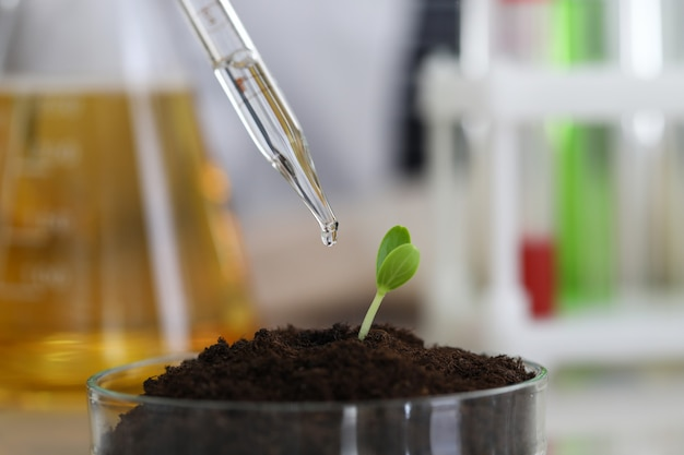 El químico hidrata el suelo con una pipeta de rocío en un fondo de primer plano de laboratorio químico. concepto de educación en investigación científica