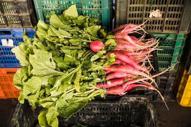 Rábano rojo fresco cosechado en cajón plástico en el supermercado