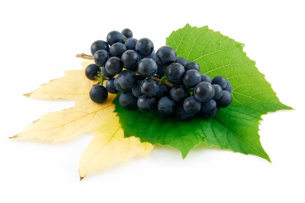 Racimo de uvas maduras azules con hojas aisladas sobre fondo blanco