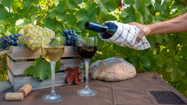 Racimos de uvas rojas y blancas y vino tinto y blanco en copas