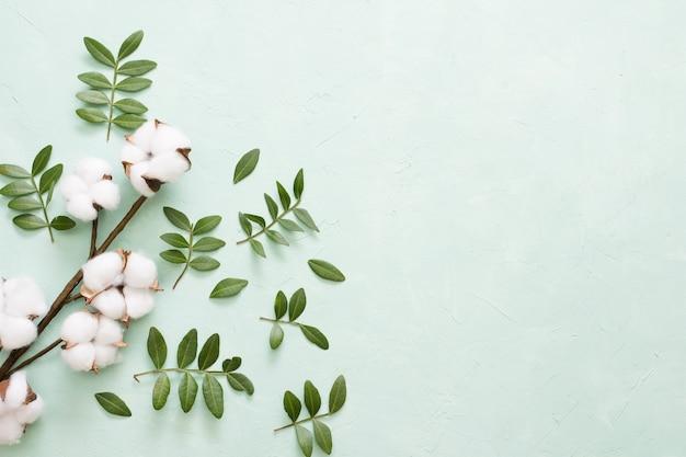 Rama de algodón y hojas verdes sobre fondo verde claro.