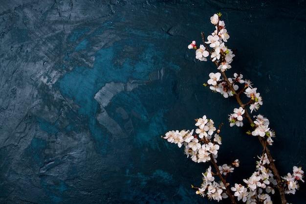 Rama de cerezo con flores sobre un fondo azul oscuro