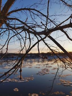 Rama de árbol con vista al lago