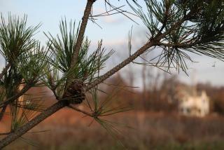 Arbol de hoja perenne fotos y vectores gratis for Arboles de hoja perenne en madrid