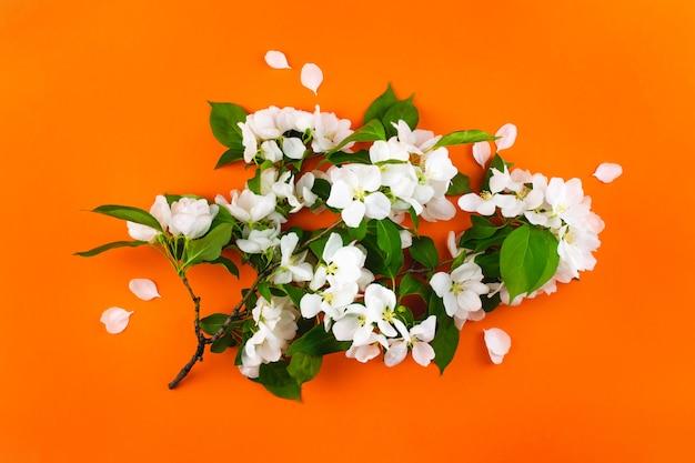 Rama floreciente de flores blancas sobre fondo naranja.