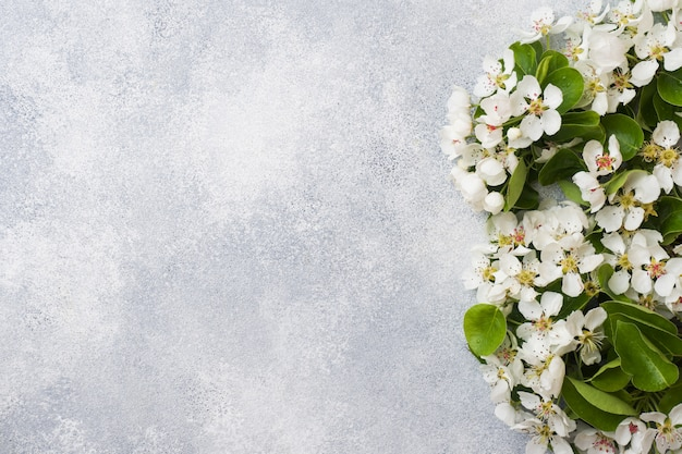 Rama floreciente primavera en gris