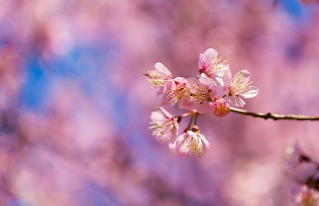 Rama con flores con fondo desenfocado