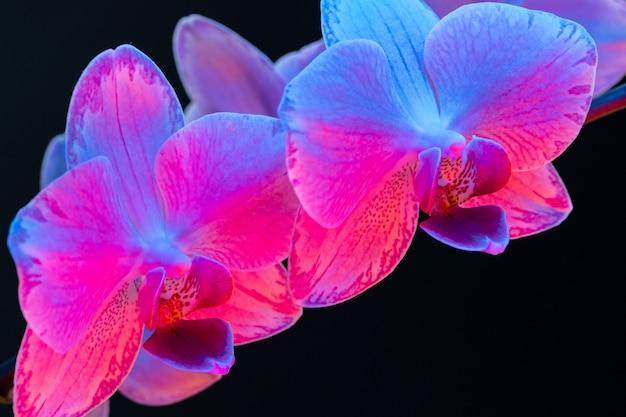 Rama de flores de orquídeas sobre fondo oscuro en luz de neón