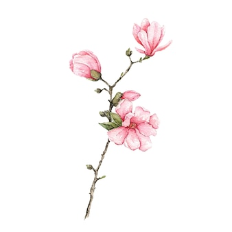 Rama con flores rosas y hojas acuarela pintada en blanco