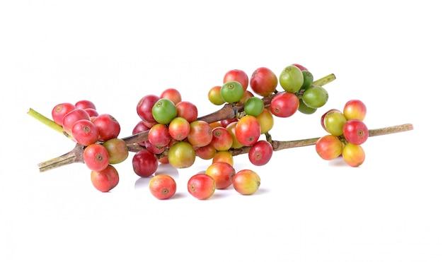 Rama del grano de café rojo aislada en blanco.