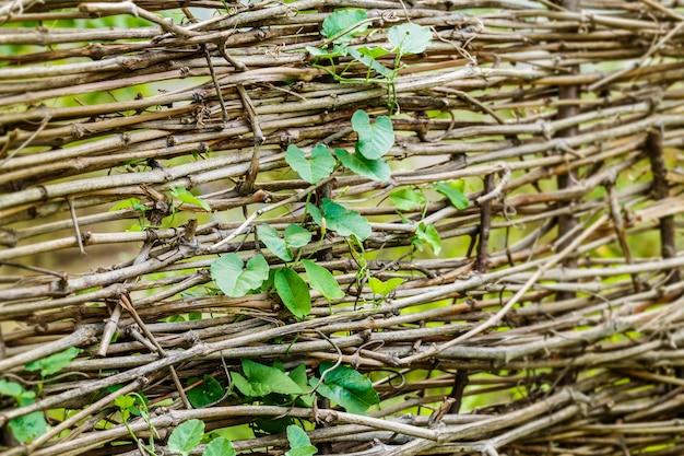 Rama con hojas y ramas secas cerca de fondo