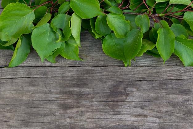 Rama con hojas verdes sobre fondo rústico.