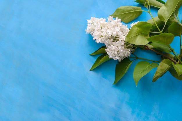 Rama de lila blanca sobre azul