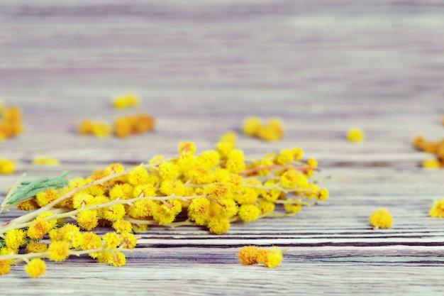 Rama de la mimosa en vieja textura de madera.