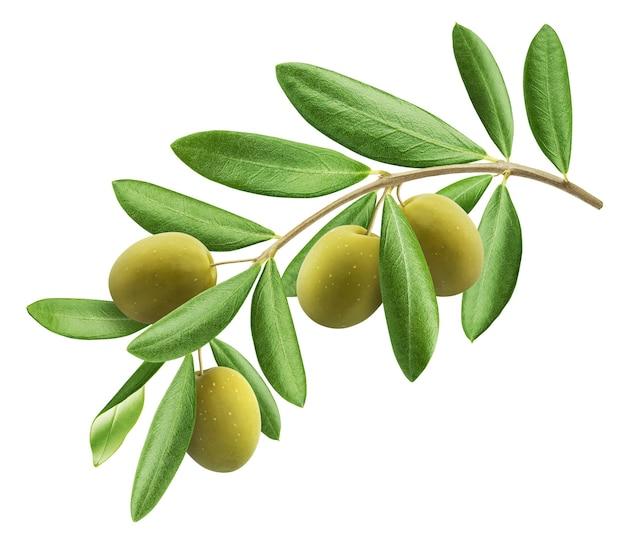 Rama de olivo, aceitunas verdes con hojas aisladas sobre fondo blanco con trazado de recorte