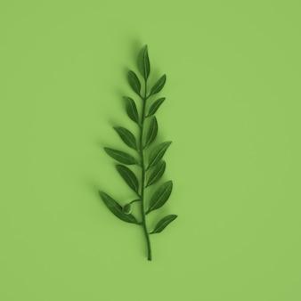 Rama de olivo verde sobre fondo verde pastel