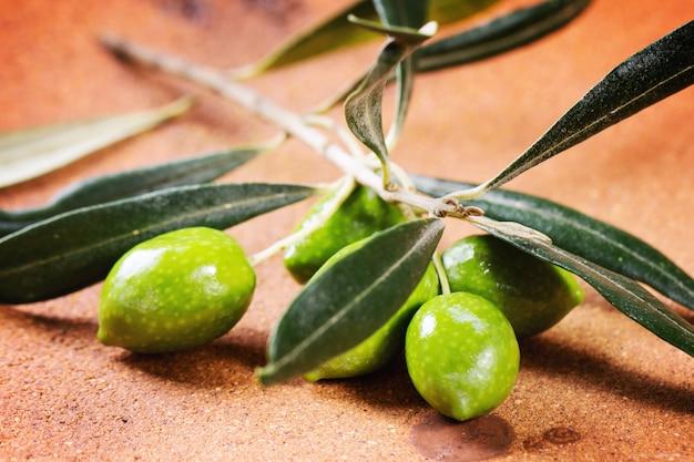 Rama de olivo verde
