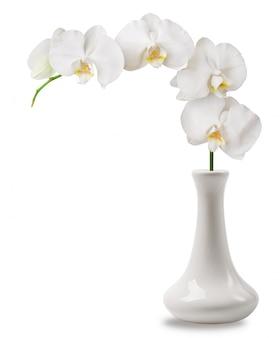 Rama de orquídea blanca en florero