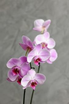 Rama de orquídea rosa de cerca