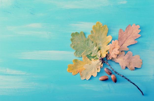 Rama con otoñales hojas de roble y bellotas sobre un fondo de madera azul