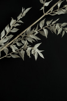 Rama de planta seca de color verde pálido sobre fondo negro. composición floral de naturaleza muerta con estilo minimalista estética.