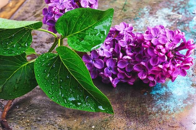 Rama con primavera lila
