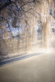 Rama de ramas de árboles colgando sobre el río helado de hielo, filtro