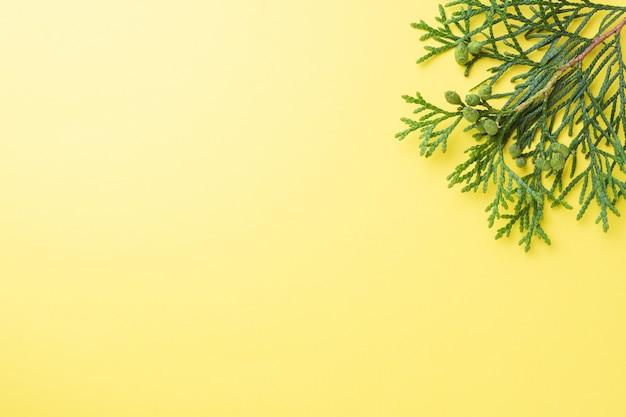 Rama thuja sobre fondo amarillo con espacio de copia.