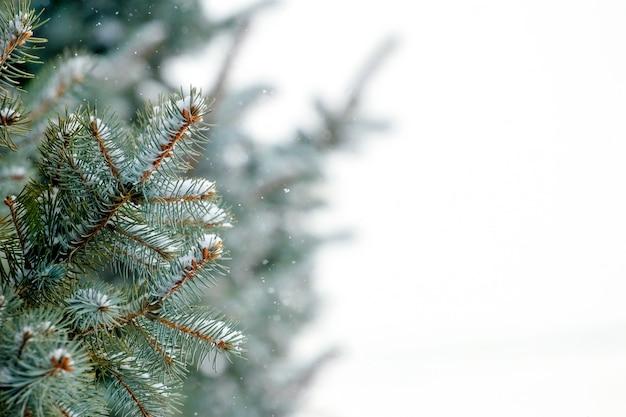 Ramas de abeto en invierno con espacio de copia