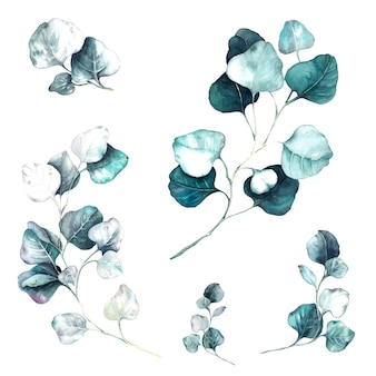Ramas de acuarela de eucalipto floral transparente hojas y ramas de fondo de hierbas