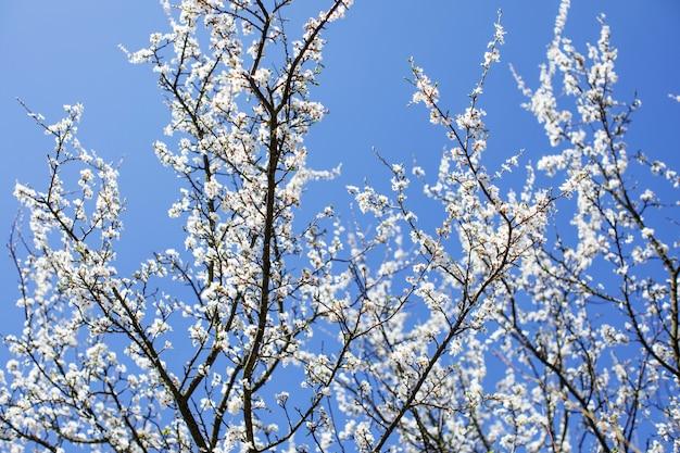 Ramas de un árbol contra el cielo. fondo de primavera