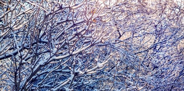 Las ramas de los árboles cubiertos de nieve crean un patrón de invierno