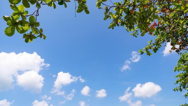 Las ramas de los árboles enmarcan hermosas hojas verdes contra el cielo azul claro imagen de fondo para la naturaleza