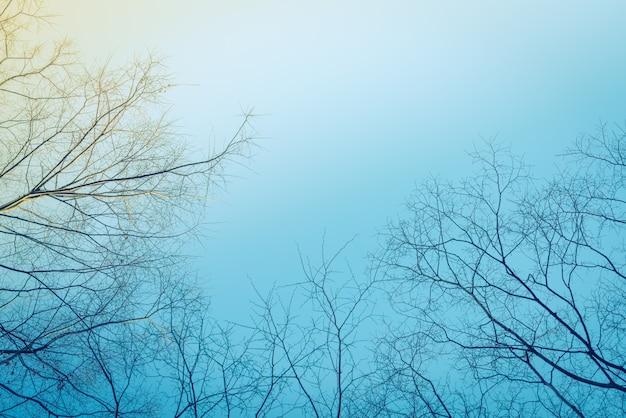 Ramas de los árboles (imagen filtrada procesados efecto de la vendimia.)