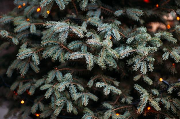 Ramas de los árboles de navidad con luces