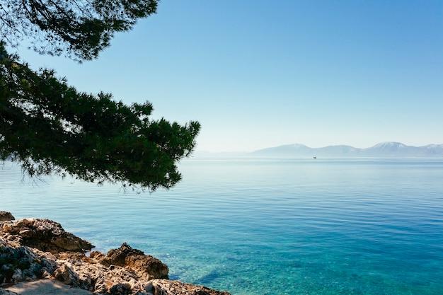 Ramas de los árboles sobre el lago idílico azul