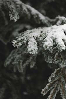 Ramas congeladas de hojas y nieve.