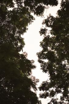 Ramas de los árboles y el cielo