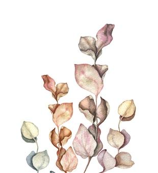 Ramas de eucalipto y dejar acuarela ilustración dibujada a mano.