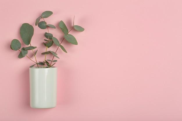Ramas de eucalipto sobre un fondo blanco hojas frescas de eucalipto como base para cosméticos a base de aceites naturales y fragancias foto de alta calidad